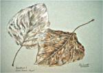 """""""Herbstlaub"""" - Farbstiftzeichnung auf Pastellpapier (c) von Cordula Kerlikowski"""
