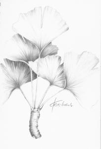 """""""Ginkgo-Blätter"""", Bleistiftzeichnung auf Skizzenpapier, (c) Cordula Kerlikowski"""