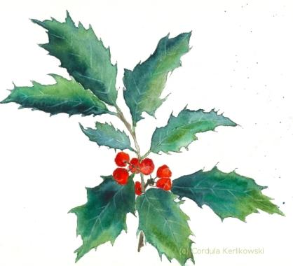 Ilex aquifolium - 15 x 15 cm, aquarellierte Federzeichnung (c) Cordula Kerlikowski
